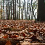Herfst in het Natuurschoon